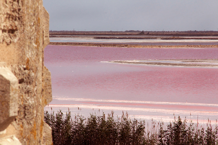 Aigues Mortes Salt Flats