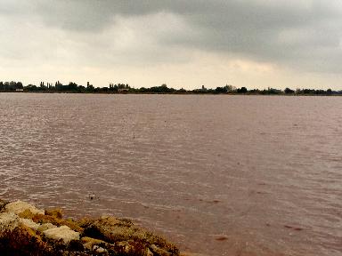 View of waters Le Saunier de Camargue @GingerandNutmeg