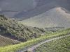 corsica-patromonio