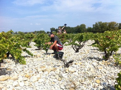Domaine Rouge Bleu #Vineyard #Provence #FrenchWines #grenache