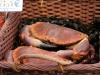 Crab #France #Seafood #Markets @GingerandNutmeg
