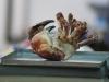 market-crab