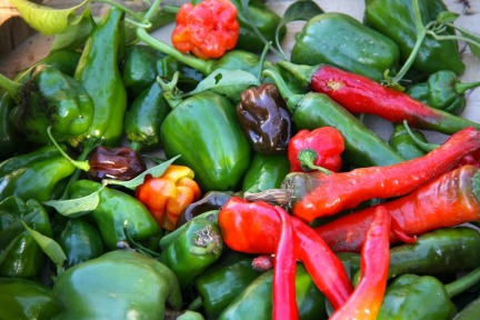 Bounty of peppers