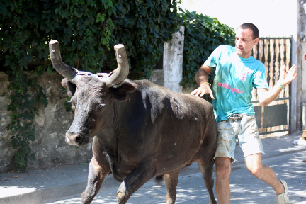 Bulls in the streets