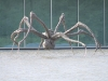 chateau-la-coste-bourgeois-crouching-spider
