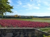 Fall vineyard colors