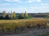 Fall vineyard colors