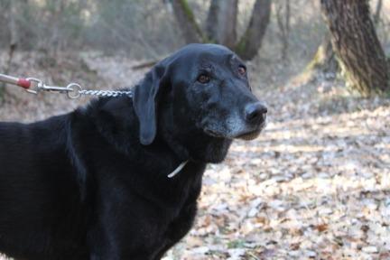 Lost Dog Checklist