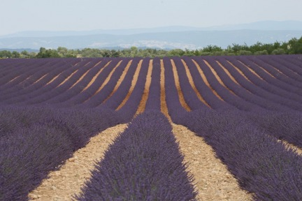 Provence the Land of Lavender