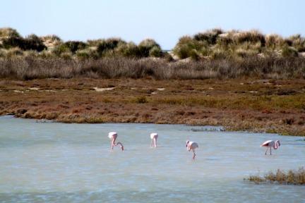 camargue-birds
