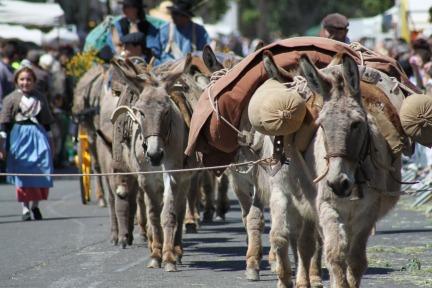 The Donkey of Provence Le Bourriquet