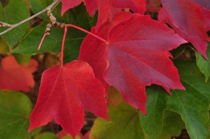 October-vines