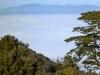 Bonnieux - Forêt des cèdres