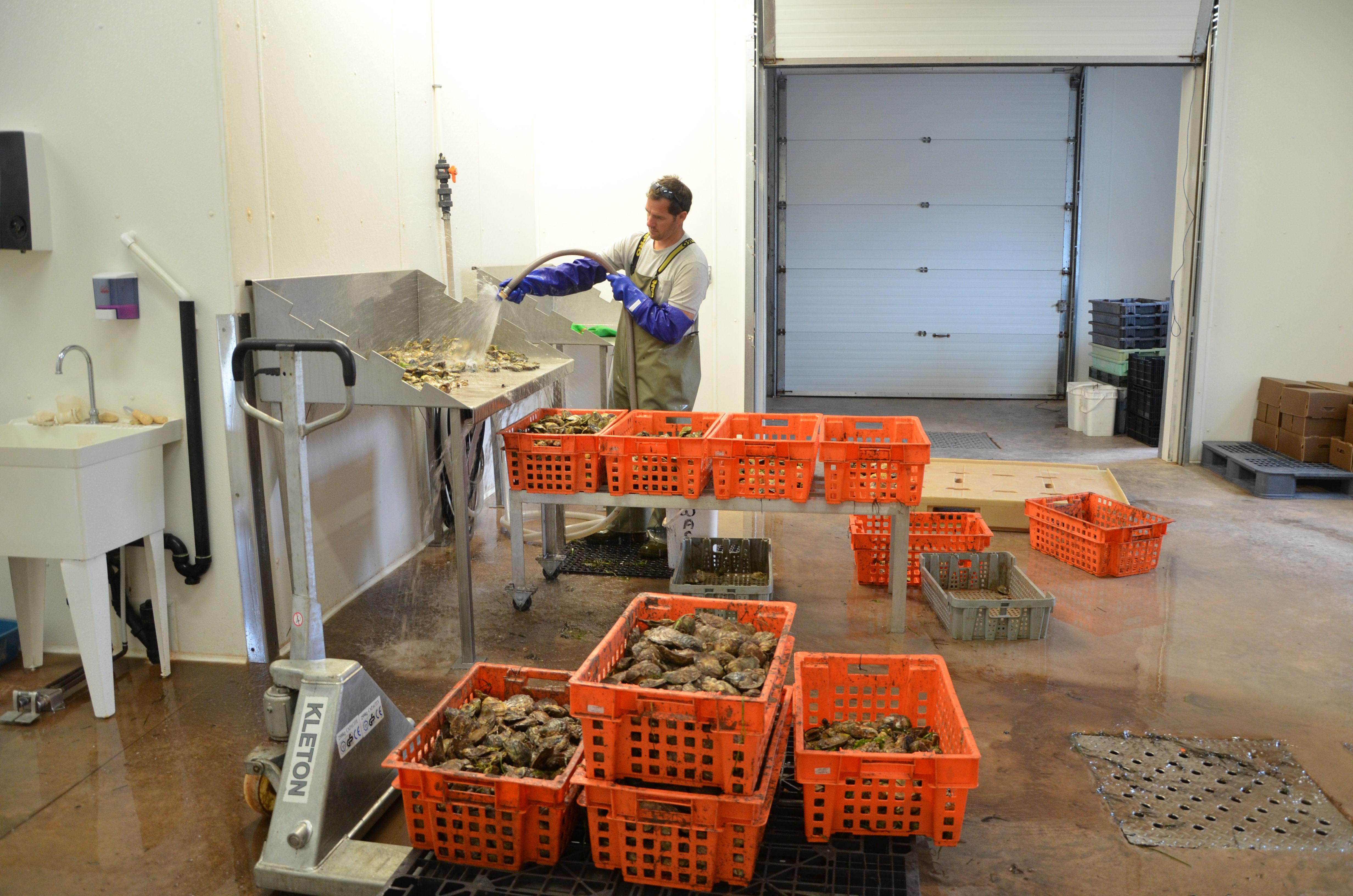 CleaningOysters Rodney's Oyster Depot #PEIOysters #RodneysOysterDepot @RodneysToronto