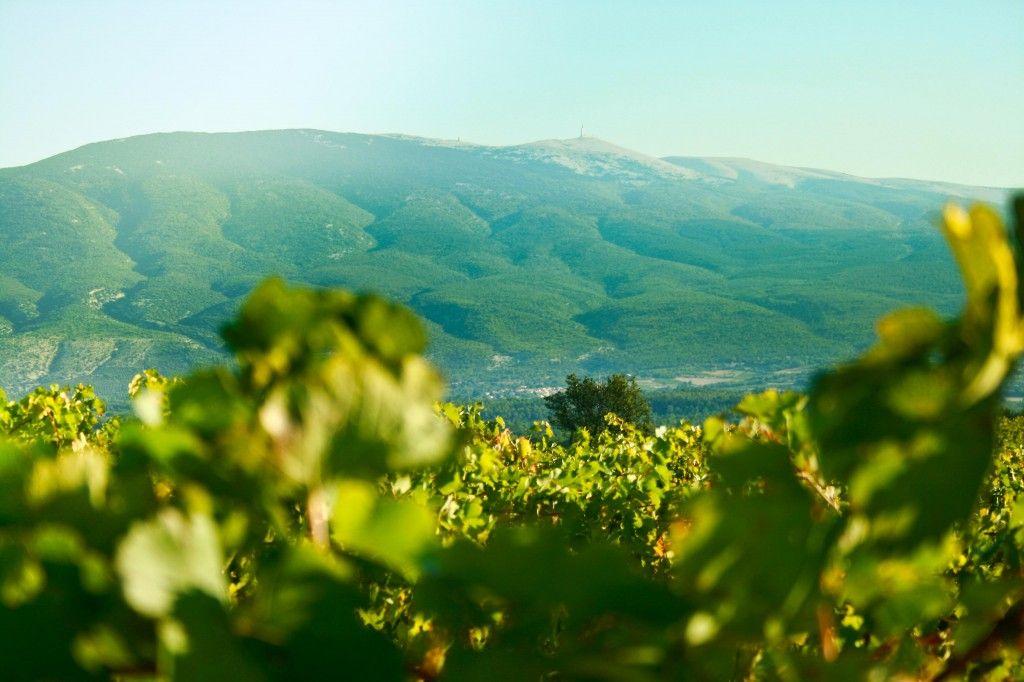 Mont Ventoux Chateau Pesquie #Provence #Vineyard #chateaupesquié  @fredchaudiere