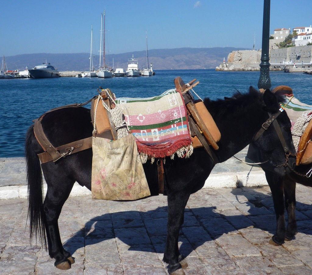 Hydra donkey #Greece #VisitGreece @GingerandNutmeg