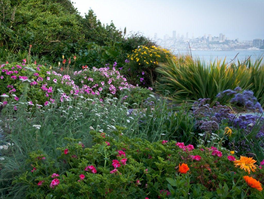 Gardens of Alcatraz #Alcatraz #Gardens #SanFrancisco