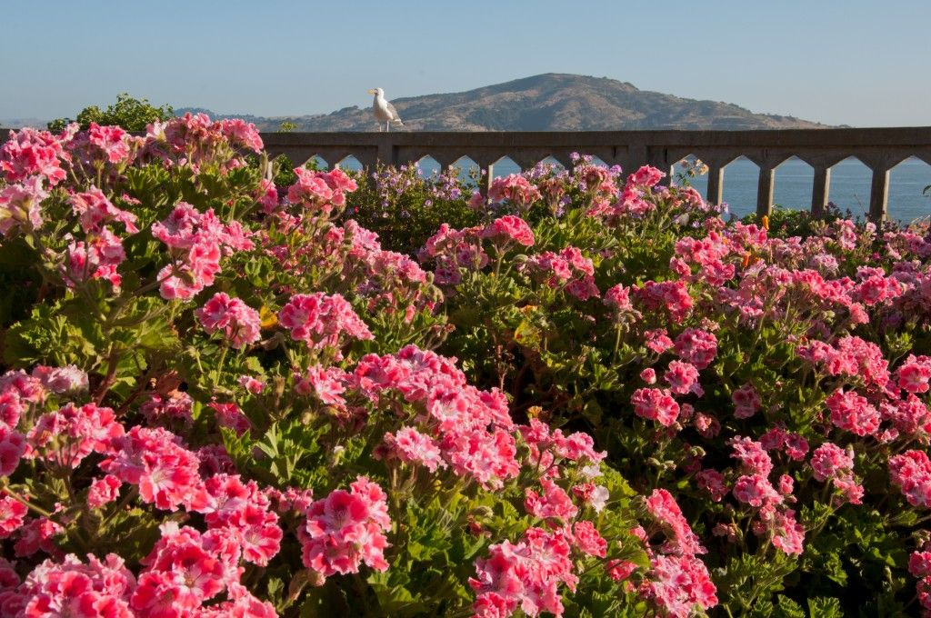Gardens of Alcatraz #Alcatraz #Gardens #SanFrancisco Elizabeth Byers