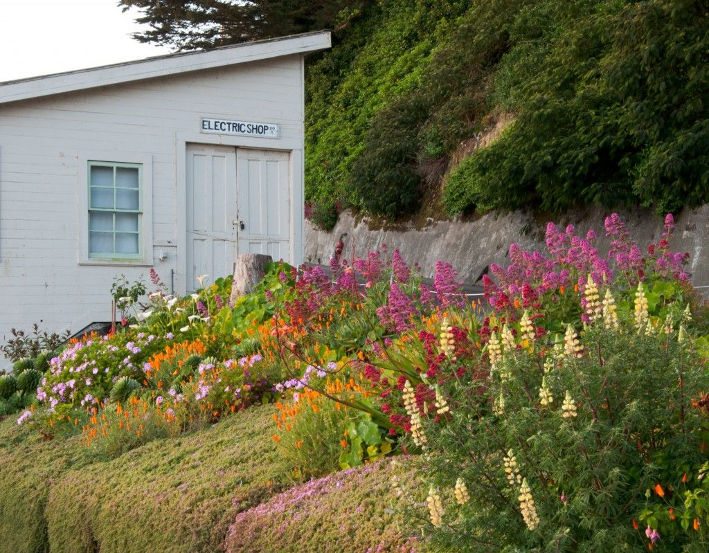 Roadside Garden, 2012 Photo by Elizabeth Byers Gardens of Alcatraz #Alcatraz #Gardens #SanFrancisco