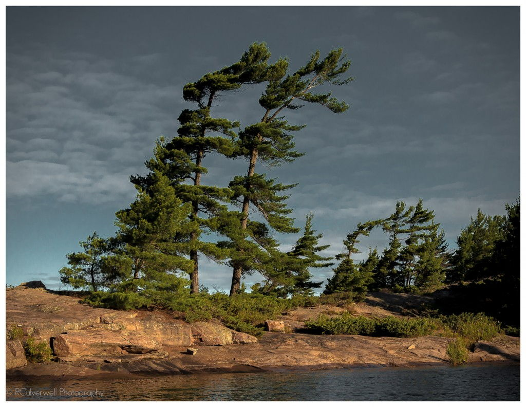 Two Trees Wall #ParrySound Richard Culverwell Photography